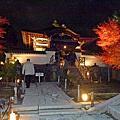 京都高台寺賞夜楓