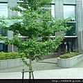 0818北海道舊道廳