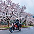 2018/04/04~2018/04/09 關西賞櫻終極版