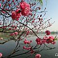 春。杭。2016.3.31~4.5