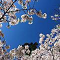 2012東本櫻之戀-4/28