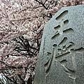2012東本櫻之戀-4/30
