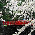 2012東本櫻之戀-5/2
