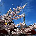 2016春 桜の足跡在京都~洛東