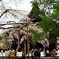 2016春 桜の足跡在京都~洛南