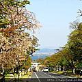 2016春 桜の足跡在滋賀