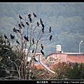 陵水湖賞鳥
