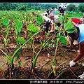 2010烈嶼芋頭節