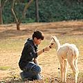 2014.2.8 台中大甲天馬牧場~鎮瀾宮