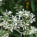 2011 生態~植物