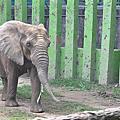 91109高雄壽山動物園