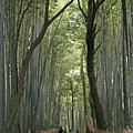 2007.10.29‧嵐山