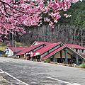 100.02.21~22武陵農場賞櫻之旅