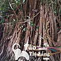 華欣 樹中廟 Wat Bang Kung
