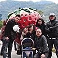 2011.01.15大湖到處都是草莓