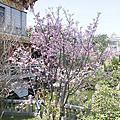 竹林山寺散策‧ 櫻花祭