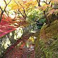 2011爸媽去京都賞楓