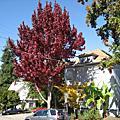Berkeley的花草動物與街景