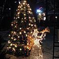 2008-11-28聖誕公園@San Jose