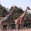 101煙火+木柵動物園