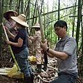 120422採竹筍