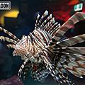 墨爾本水族館(Melbourne Aquarium)