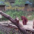 漫步在雲端+新竹動物園一日遊