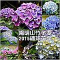 20150607 - 陽明山,繡球花