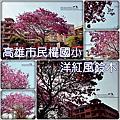 20160226【民權國小-洋紅風鈴木】