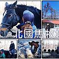 【北海道】北國馬牧場