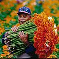 田尾花卉攝影比賽得獎作品
