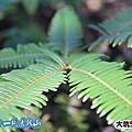 2013年12月01日台中大坑5-1步道