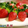 2013年12月28日大湖‧千秋草莓園