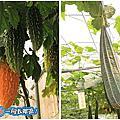 2014年11月29日2014新社花海暨臺中國際花毯節