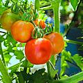 202009後院蔬果