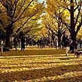 東京深秋小旅行