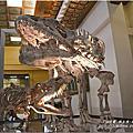地球最古恐龍展