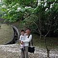 2012  賞桐花