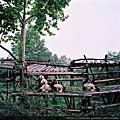 2009 四川之旅- 中型相機6 x 6篇