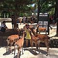 2013.06.26~06.30 日本大阪斷腿之旅