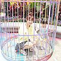 小敏麻糬麗寶樂園探索去~