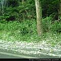 2011.05.08內湖象園+鳥來走走*母親節Part2