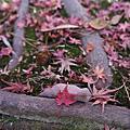 2013.11.23日本山陰山陽DAY4:井原鐵道.岡山後樂園