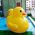 2013.08黃色小鴨出現在嘉義市了嗎?