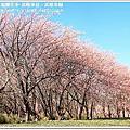 2017.02.18武陵農場賞櫻