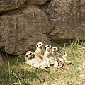 20100724 Opel Zoo