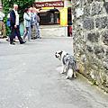 蜜月瑞士-迷人的小花城鎮Yvoire
