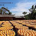 (434)2015.10.18新竹味衛家、金漢柿子