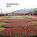 (439)2015.11.08台中新社花海