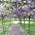 (707)2020.04.03淡水紫藤咖啡2館+大湖公園